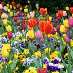 Flores CambioClimatico 23-02-10