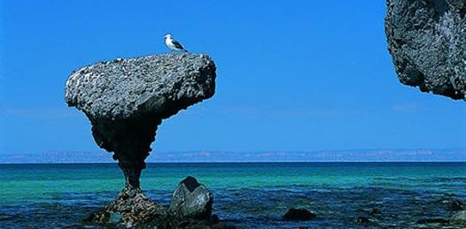La playa Balandra, una de las significativas de esta capital ha sido certificada como playa limpia, lo que da seguridad a los bañistas nacionales y extranjeros que llegan a disfrutar de las bellezas de la zona.