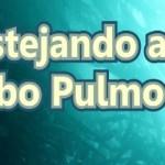 La comunidad de Cabo Pulmo acompañada de investigadores y autoridades con experiencia en conservación hablarán de la historia, importancia, y se plantearán la manera de enfrentar el reto actual de hacer compatible la conservación ambiental con la vocación turística del estado.