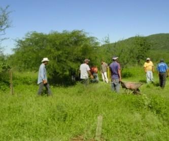 La Conafor invita a participar en el certamen nacional al Mérito Forestal 2010, como estímulo a personas o empresas que apoyen la conservación y uso sustentable de los recursos forestales.