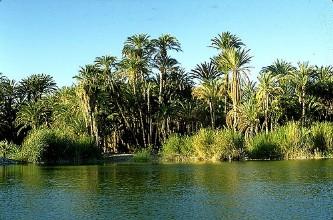 Laguna_San_Ignacio