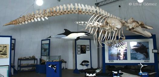 MuseoBallena01