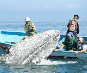 Los prestadores de servicios turísticos de la comunidad se preparan para la temporada del avistamiento de las ballenas gris.