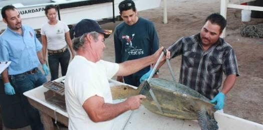 Concluyó curso de Capacitación en monitoreo de tortugas marinas.