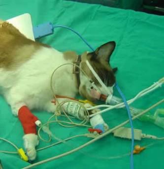 UABCS_veterinarias