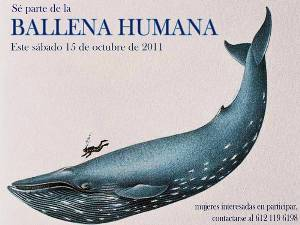 Emulando a Tunick, buscan construir una ballena humana con mujeres desnudas
