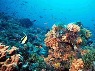 IMP-ArrecifeCoral