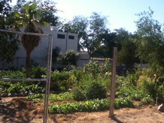 IMP-JardinComunitario