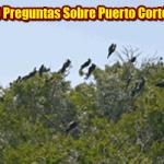 10 Preguntas Sobre Puerto Cortes
