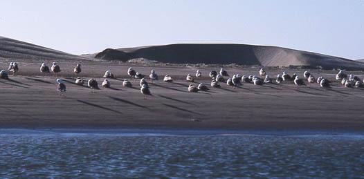 Bahía Magdalena es una de la las reservas más valiosas con las que cuenta el Estado de Baja California Sur en vida marina.