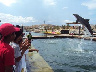 delfin333