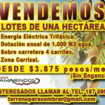 tamarindos-2