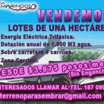 tamarindos-3