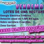 tamarindos-4