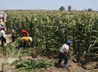 Financiera Rural y el Gobierno del Estado firmaron el día de ayer un convenio de coordinación económica, ofreciendo así un presupuesto de 162 millones de pesos para apoyar al sector productivo de Baja California Sur (BCS) el tiempo que resta del 2012.
