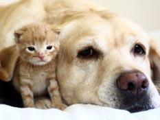 GMX Seguros es la primera aseguradora en ofrecer una protección especial para las mascotas.