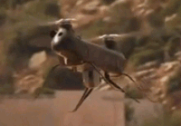 Robot israelí