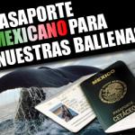 Pasaporte para nuestras ballenas