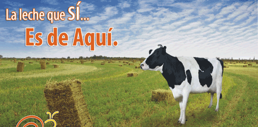 No hay «mala leche» contra la industria lechera local