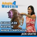 Adopta una mascota (ardilla 225x225)
