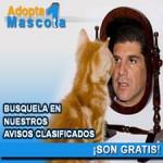 Adopta una mascota (gato 225x225)
