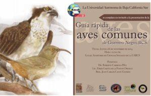 """""""Guía rápida de las aves comunes de Guerrero Negro, BCS"""""""