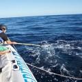 desenmalle de ballena