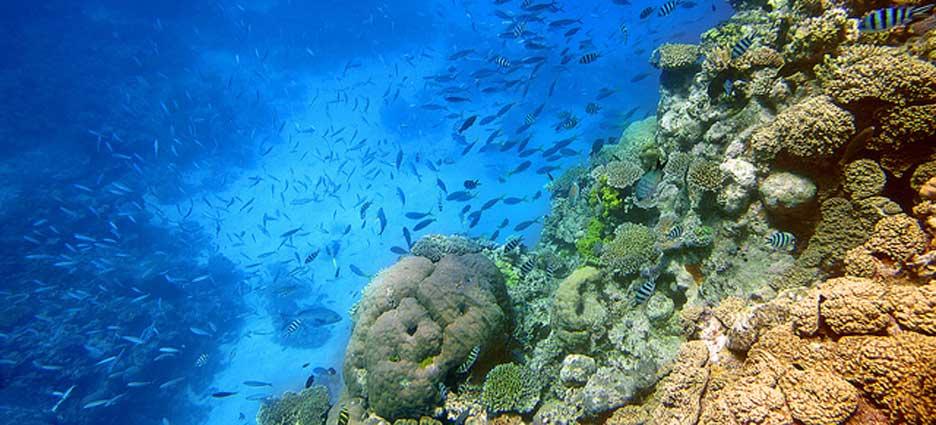 arrecifecoral
