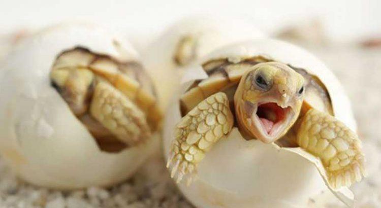 Apuesta Grupo Sandos  por la conservación de la tortuga