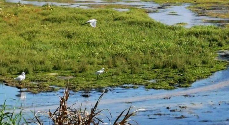 Diplomado para conservación de sitios para aves playeras