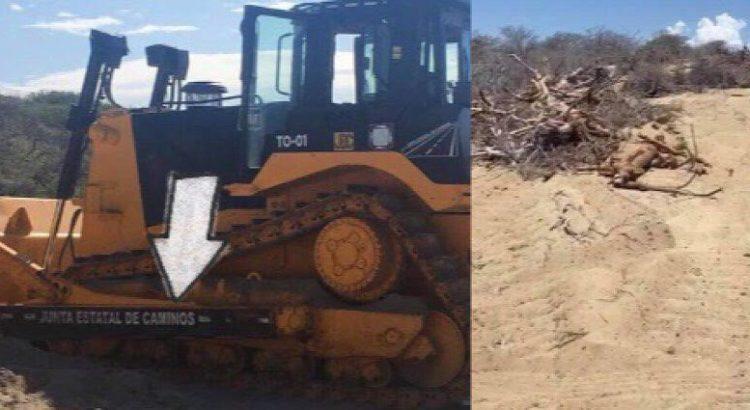 Deforestan con maquinaria estatal zona costera de Los Cabos